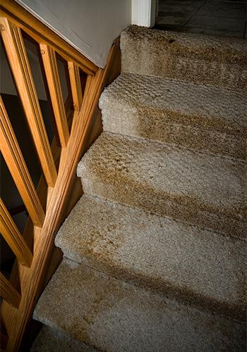 water damaged carpet insurance claim