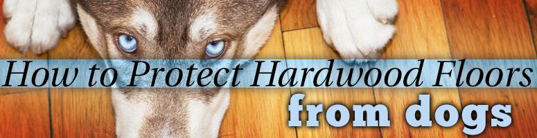 dog resistant hardwood floors