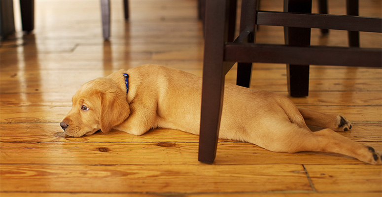 how to prevent dog scratches on hardwood floors