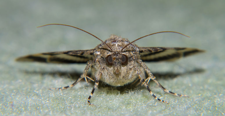 if you have carpet moths it's time to replace the carpet