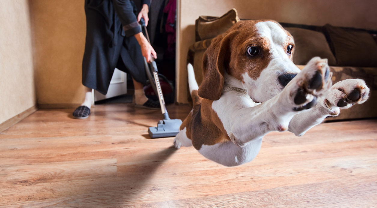 Pet Friendly Flooring - SmartStrand Forever Clean Carpet